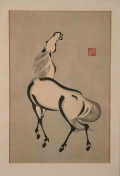 A standing horse with its head up